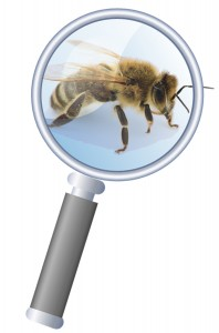 Honeybee-Magnifying-Glass