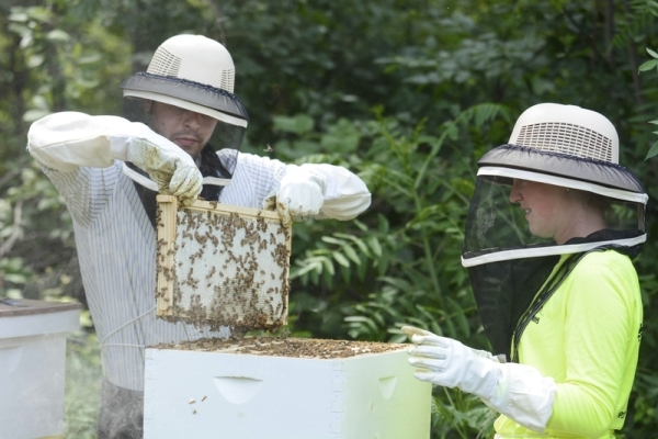 Journal Gazette Bee Keeper Photo