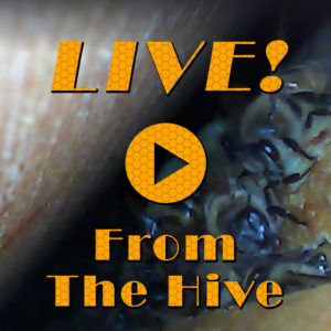 live-from-the-hive-photo
