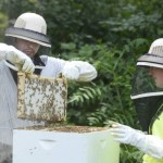 Bees As An Education Tool : Journal Gazette