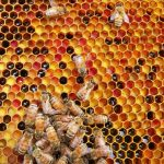 The Importance of Honey Bees: An Interview with Southwest Honey Co. : WBOI NPR